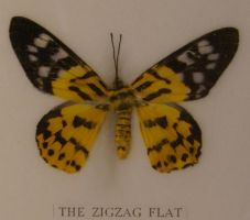 zigzag flat butterfly by Alegion-stock