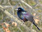 True Colors by Synari