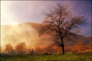 Fog and Light by Hassan9