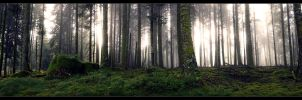 Enchanted Forest by FlorentCourty
