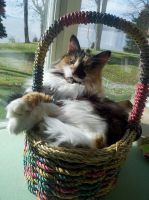 Basket kitty by Kazul2112
