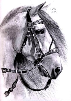 Andalusian Horse by ManiaAdun