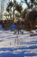 green trees and snow by FreedomeSoul88