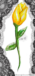 Yellow Tulip by Shawneigh