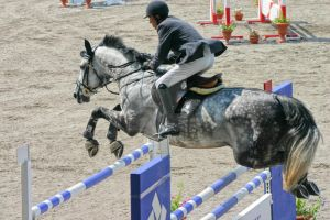 Show Jumping Championship 2006 by bloody-rider