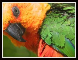 Green and Orange by kanes