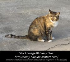 Cat Stock 13 by Cassy-Blue