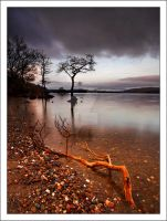 Milarrochy Bay Tree by DL-Photography
