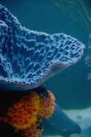 Sea Anemones and Coral by mo013
