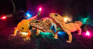 Christmas Geckos by Murphy1210