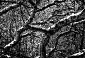 branches, black and white by Tjabula