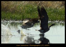 Fly Away 1 by KSPhotographic