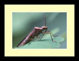 Insect Photo 17 by blookz