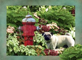The Pug - Lost and Found! by 3punkins