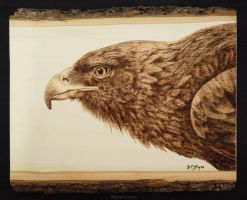 Golden Eagle - Woodburning by brandojones