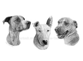 'Spencer, Bruno And Roxy' commission in graphite by moniquepetportraits