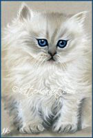 Himalayan Kitty by Katerina-Art