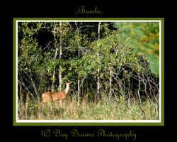 .:Bambi:. by DayDreamsPhotography