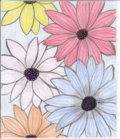 Flowers Drawing by Steffie86