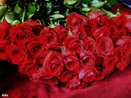 red roses by biba59