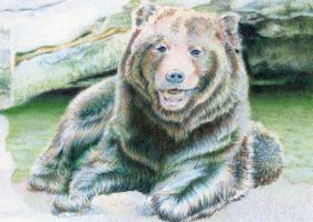 SOLD - Drawn to Help 5.3: Bear Necessities by theperian