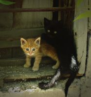 baby cats by lisans