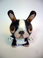 Boston Terrier Dunny by bryancollins