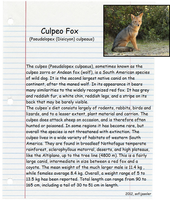 Culpeo Fox by sofijasoler