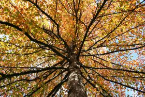 Fall Colors 10 by BRANCY