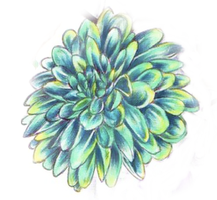Green and blue Chrysanthemum by mpenckofer