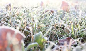 Autumn Frost by LLJPhotography