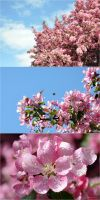 Blossom Series by Ashwings