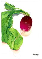 radish gouache painting by silentsketcher