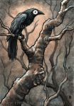Black Bird IX ink and watercolour by shmeeden