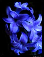 Blue Flower by Mirlenges