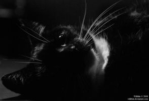 cat in black II by Wilithin
