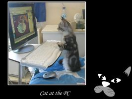 Cat a the pc by Flore