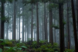 Mistic Forest by ChristopheCarlier