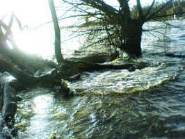 TREES in High Water STOCK X by ChaosStocks