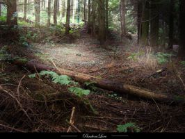 Forest 14 by AnitaJoy-Stock