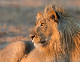 Illuminated Royalty by MorkelErasmus