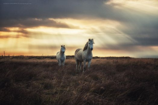 Hornless Unicorns by Stridsberg