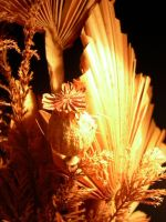 Dry flowers 2 by halo8