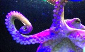 Octopus the third by stonegriffen77