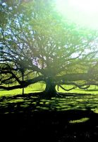 Silhouette of a Tree by xxSmack111