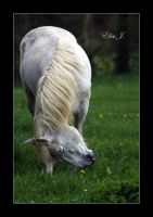 Horse VI by EliseJ-Photographie