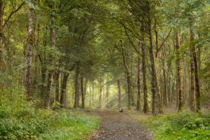 Donadea Forest by Lightartistry