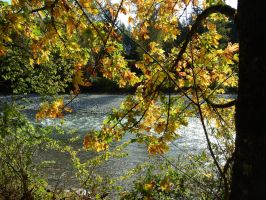 Vedder river trail 10/16/2015~2 by Matthew-Fuller