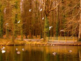 duck lake by meenags