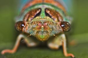 Junior.The.Cicada by OctoberRainne